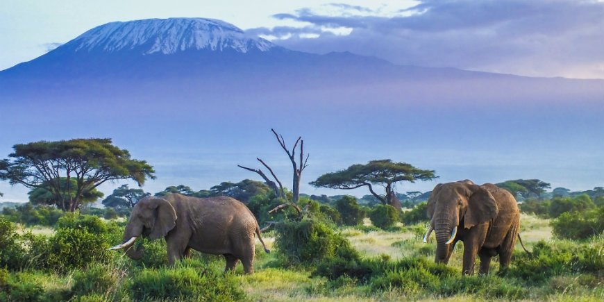elefanter i Amboseli nationalpark